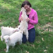 How She Farms — Tutorials and Hacks from an Experienced Shepherdess